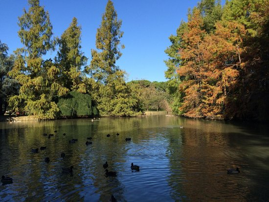 Gestione della fauna del Parco Bucci e del Parco del Tondo di Faenza
