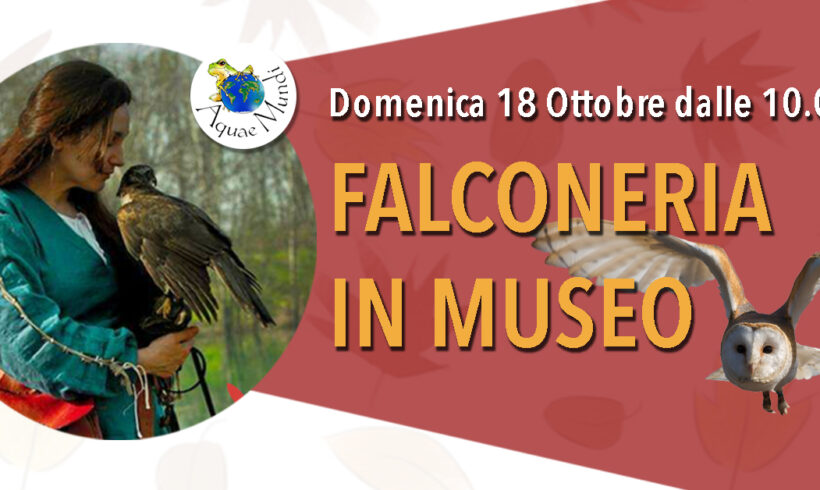 Falconeria in Museo